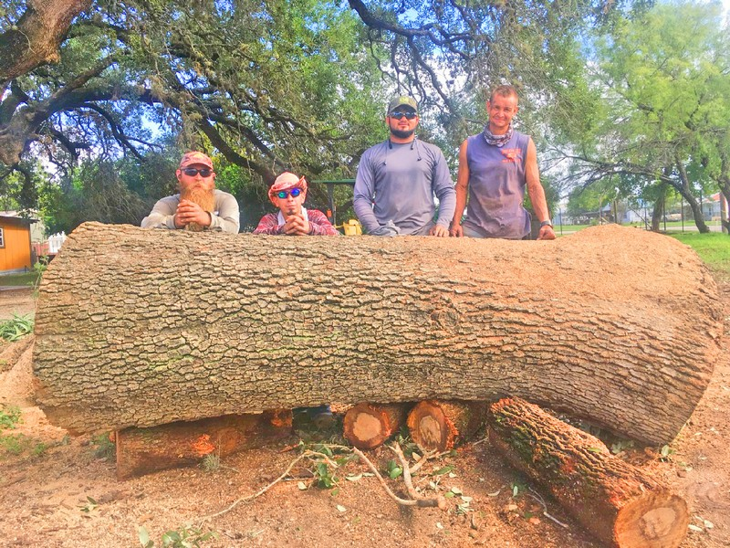 Rains uproot huge oaks in Devine