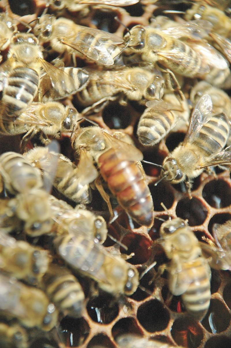 Bee attack on CR 5710 in Devine